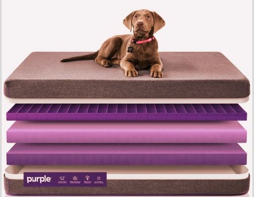 Purple Pet's Mattress Photo